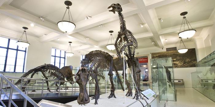 American Museum of Natural History Nueva York con niños