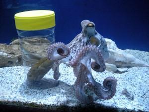 Aquaworld uno de los mejores zoos y acuarios de europa