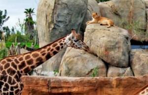 Bioparc uno de los mejores zoos de europa