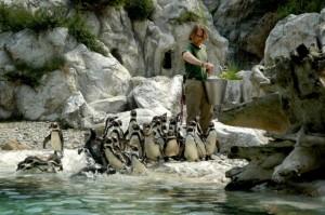 zoo de Viena uno de los mejores zoos en Europa