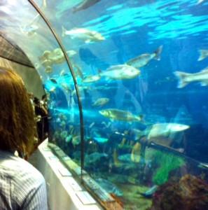 acuario Barcelona con niños