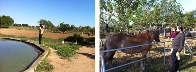 animales de granja del encuentro Familias en Ruta
