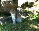 Una mañana entre fauna autóctona en la Cañada Real