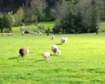La granja escuela Conlleu en Asturias