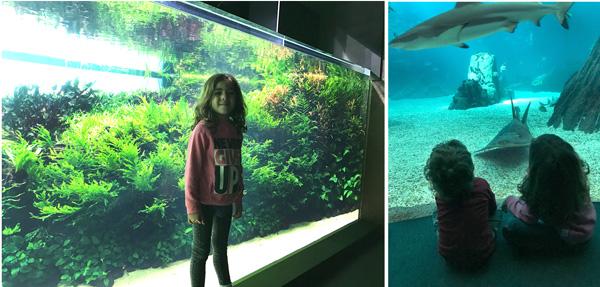 oceanario lisboa con niños