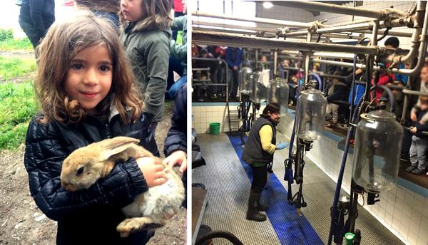 granja la cuesta asturias con niños