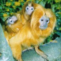 zoo de Jersy en el Top 10 zoos Europeos