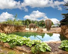 Zoo de Dublin en el Top 10 zoos Europeos