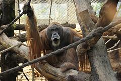 zoo de Frankfurt en el Top 10 zoos Europeos