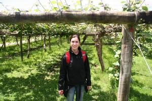 Agrodome plantas de kiwis