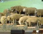 Una granja con espectáculo en Rotorua