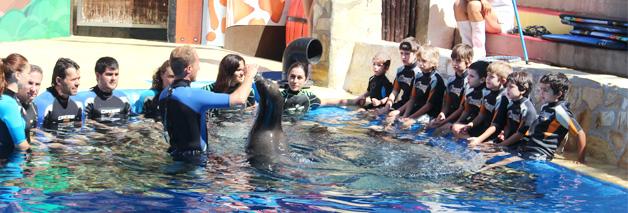 Encuentro con leones marinos en MundoMar