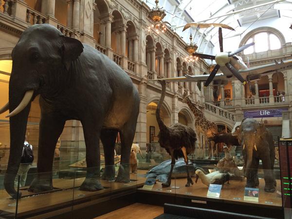 viajar a Glasgow con niños, museo kelvingrove