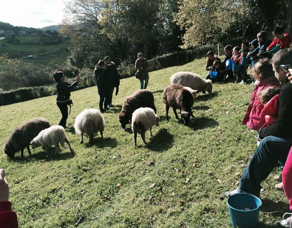 granja-conlleu-ovejas Asturias con niños