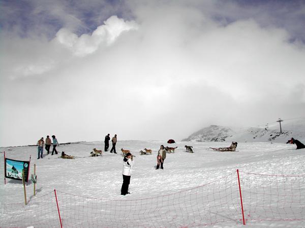esquiar con niños trineo de perros