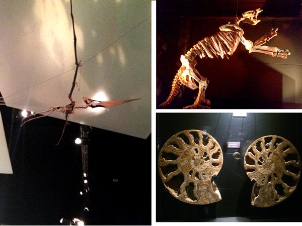 museo paleontológico Dinopolis