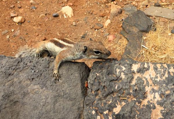 Fuerteventura con niños fauna
