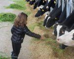 Una Granja con sello de Bienestar Animal: Mas La Coromina
