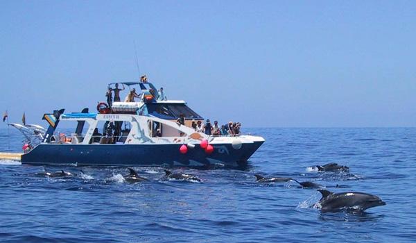 Avistar Cetaceos La Palma con Niños