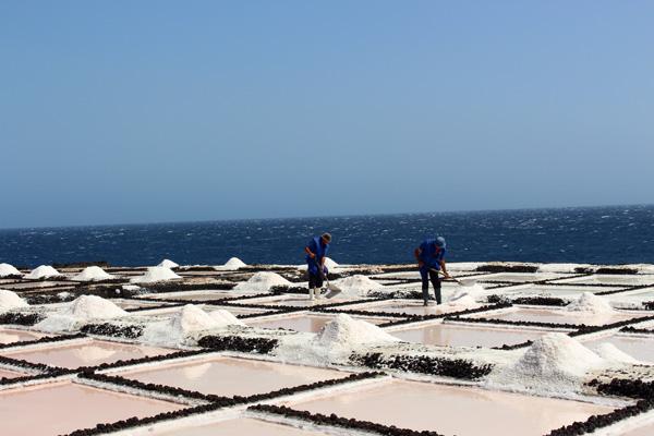 salinas de fuencaliente trabajando La Palma con niños