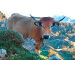 Asturias rural con niños: actividades en la naturaleza