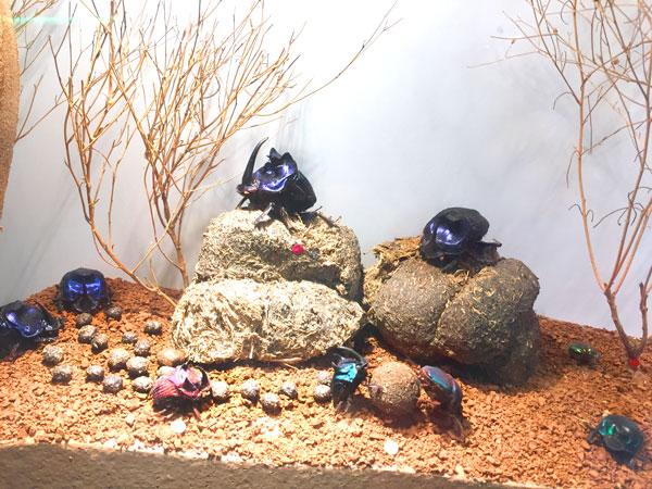 escarabajos insect park sierra del guadarrama
