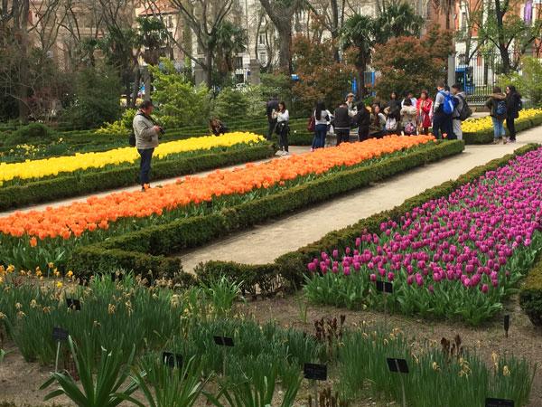 jardin-botanico madrid con niños