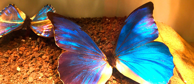Conocer el Mundo de los Insectos en Insect Park