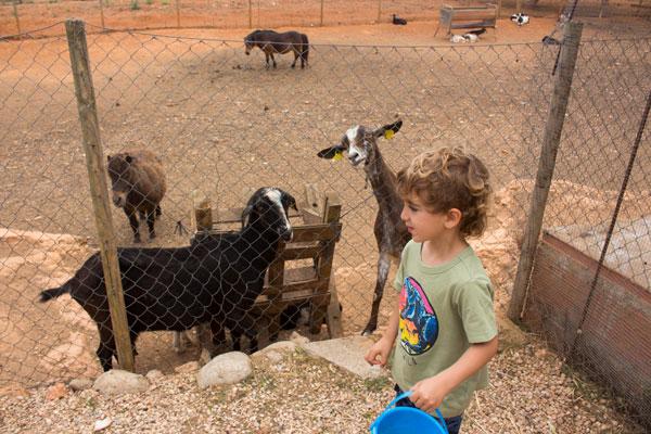 ibiza con niños can muson cabras