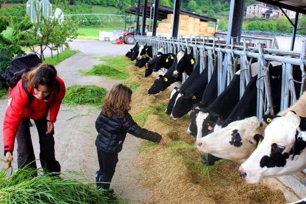 Granja vacas Mas la Coromina